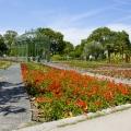 Blumengärten Hirschstetten: Sommerblumenschau; Wien, 09.06.2013