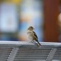 """bird (Projekt \""""Linie 1\"""")"""
