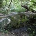 bei den Quellen des Acharon (Epiros); 03.06.2013
