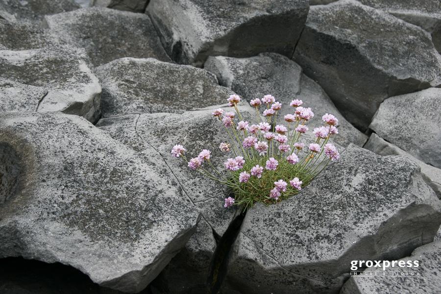 Leben zwischen Basaltsäulen