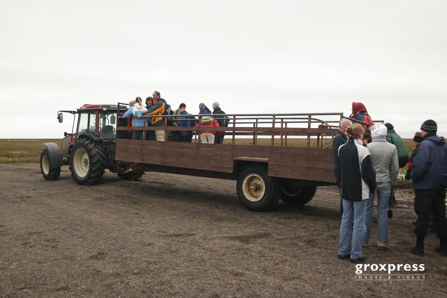 mit dem Truck zu den Papageientauchern (Ingólfshöfði)