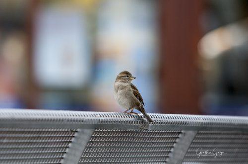 bird (Projekt