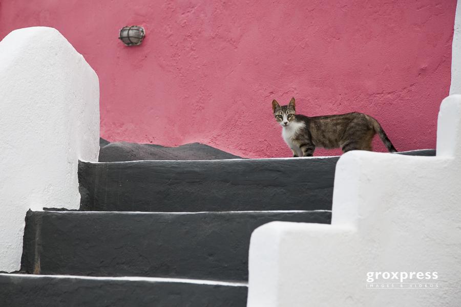 Katze (Fira)
